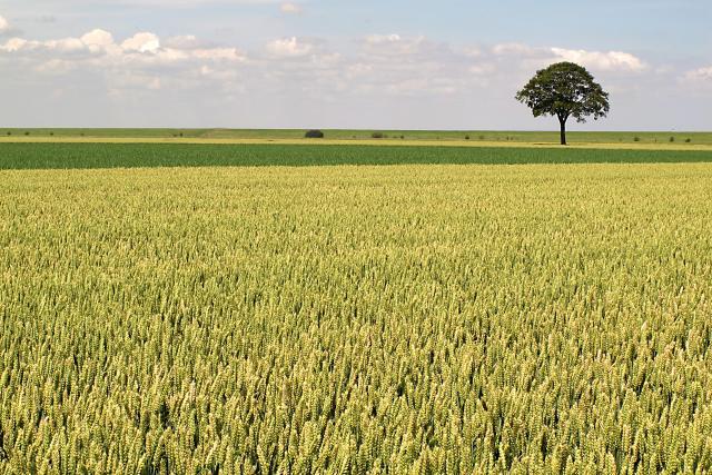 weites Feld und ein Baum